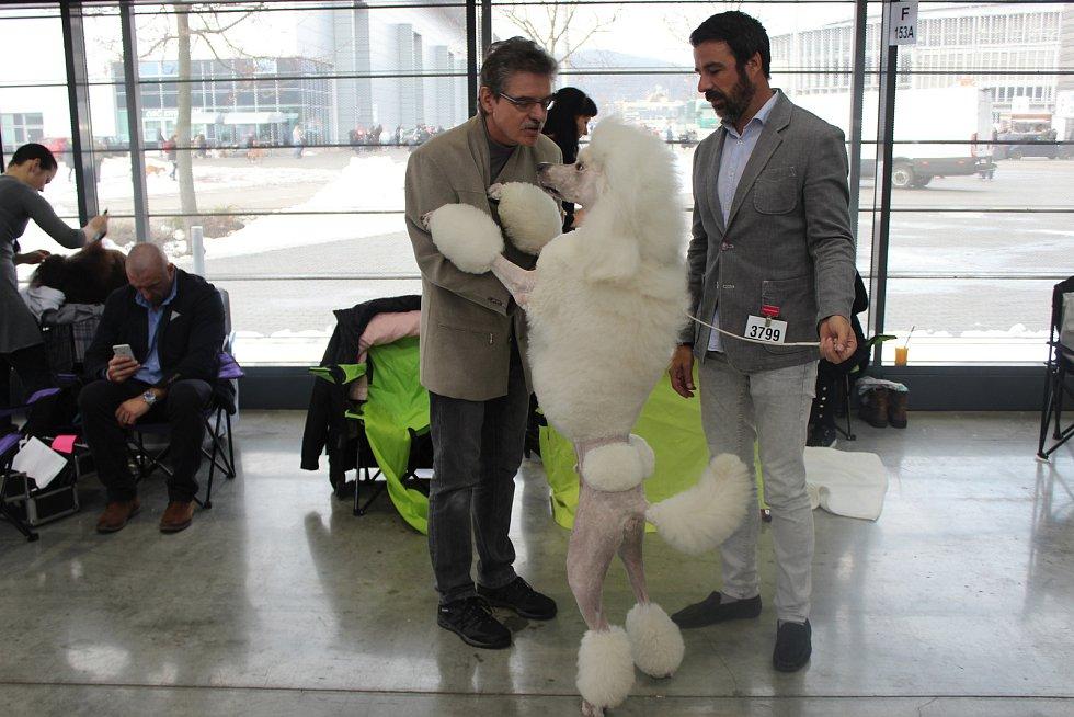 Na mezinárodní výstavu psů na Brněnském výstavišti přihlásili majitelé více než čtyři tisíce zvířat. Výstava zaplnila tři pavilony.