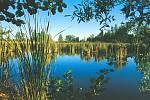 Betlém se stal po svém vzniku v roce 1990 skutečným žabím královstvím. Současně se začal na území mokřadu samovolně obnovovat poničený terén.