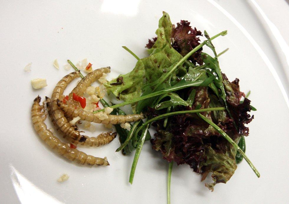Hmyzí pokrmy v restauraci Leporelo.