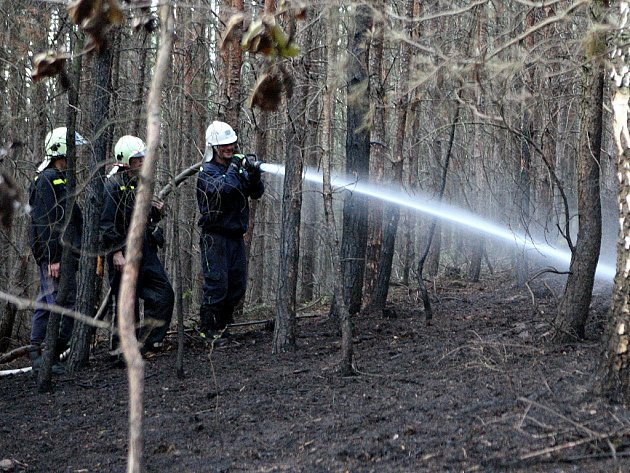 Hasiči hasí les u Říkonína na Brněnsku