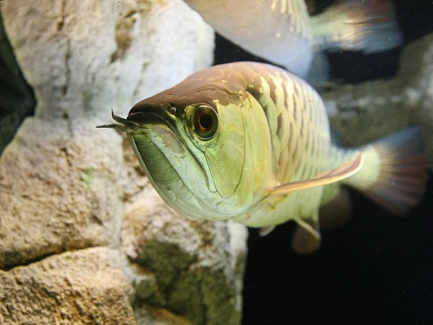 Sladkovodní akvária s osmdesáti vodními živočichy mohou návštěvníci vidět v Pavilonu exotického ptactva v brněnské zoologické zahradě.