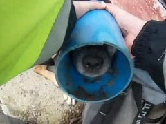 Na pomoc fence, která koncem minulého týdne uvízla hlavou v půlmetrové trubce z tvrdého plastu, vyrazili do zahrádkářské kolonie v Novém Lískovci brněnští strážníci. Psa nakonec vysvobodili až veterináři s vazelínou.