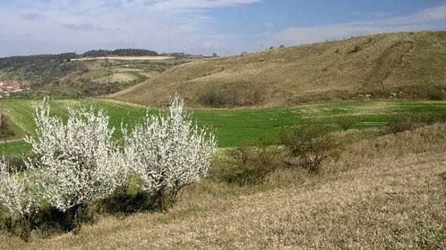 Na Adamcích každé jaro pokryje koberec květů.