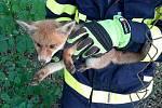 Lišče uvízlo v plotě, pomohli mu hasiči