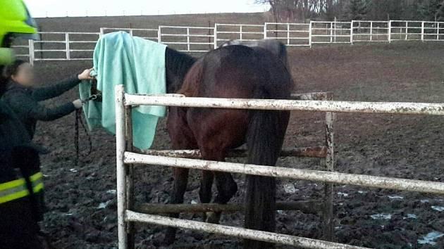 Kromě drobných požárů zachraňovali Jihomoravští hasiči na Silvestra ženu na rozhledně i zaklíněného koně.