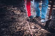 Školní lesní podnik Masarykův les Křtiny letos vysadí téměř 1 milion nových stromků. Je to reakce na kůrovcovou kalamitu.