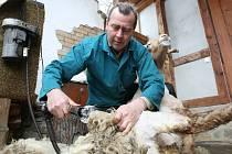 V brněnské zoologické zahradě se na velikonoční neděli stříhaly ovce.
