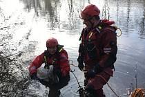 Opeřence se zlomeným křídlem odchytili ve středu dopoledne ve Svratce v brněnském Komárově hasiči specializující se na záchranu zvířat.