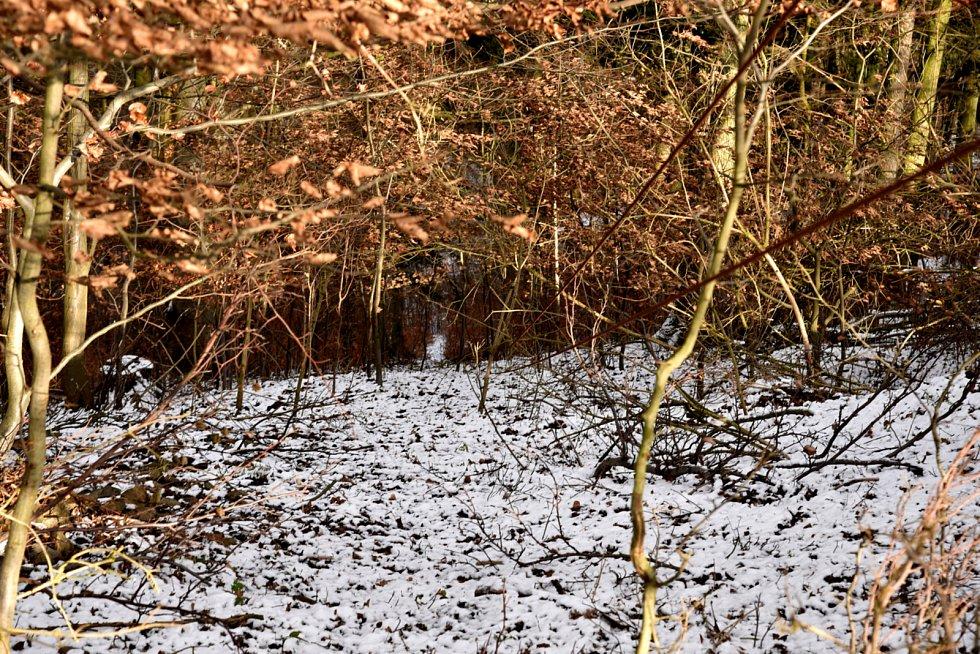 Zcela zarostlá trasa lyžařského vleku ve Velenově. Vlek je mimo provoz přes 20 let, ale stále se vterénu nachází.