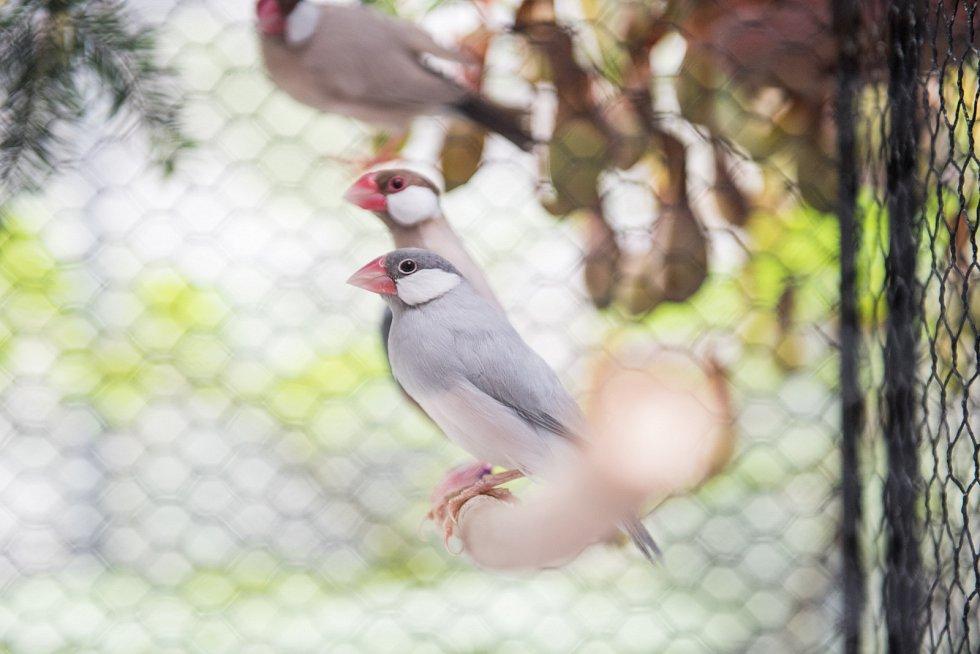 NA BIDÝLKU. Stovky slavíků, zebřiček a dalších drobných okrasných ptáků zaplnily skleníky botanické zahrady u Přírodovědecké fakulty Masarykovy univerzity v Brně.
