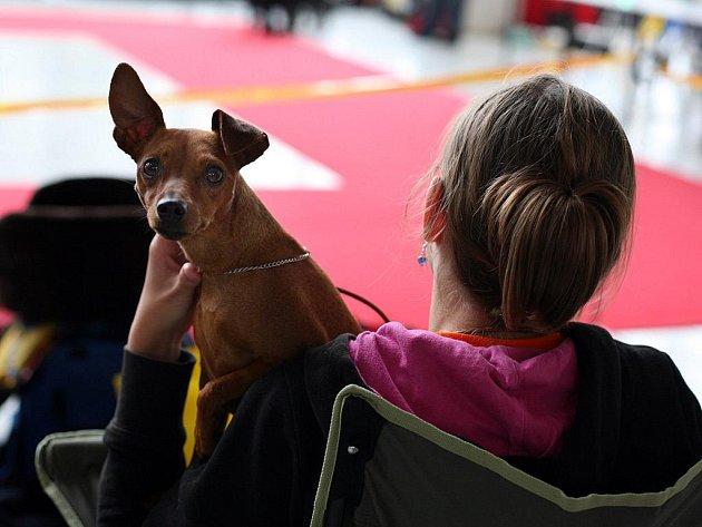 Soutěžní výstava psů na brněnském výstavišti.