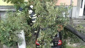 Na jihu Moravy při úterních bouřkách padaly stromy. Některé domácnosti zůstaly bez proudu.