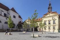 Prostor pro vodní prvek mezi platany uprostřed Dominikánského náměstí v centru Brna.