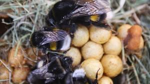 """Festival Mendel je... včelař: pusy ulepené od medu, i toho """"vonícího"""" po močůvce"""