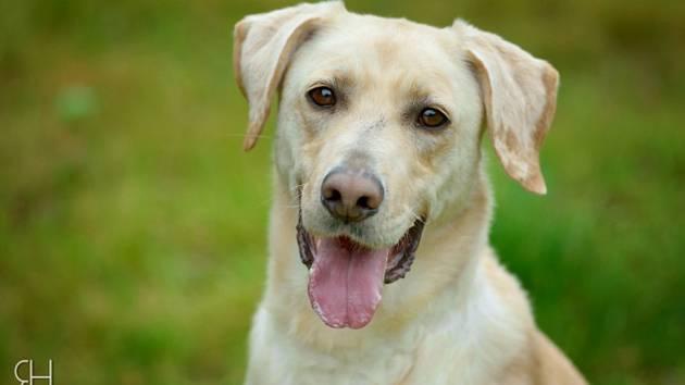 Pes, ilustrační foto