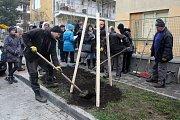 Komentováné sázení stromu netradiční metodou v brněnské Gallašově ulici.