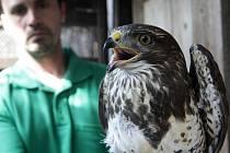 Záchranná stanice v Rajhradě na Brněnsku vrátila v úterý do přírody první letošní větší skupinu uzdravených ptáků.