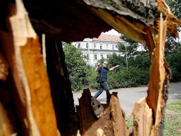Spadlý strom v parku u Janáčkova divadla v Brně.