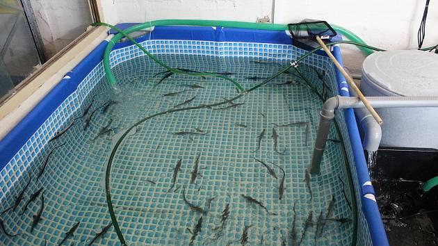 Firma sháněla od lidí peníze na aquaponickou farmu. Na Brněnsku o ní nic neví