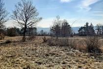 Brněnský Nový Lískovec už začíná vonět jarem.
