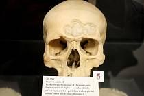 Mít v ruce lidskou lebku nebo stehenní kost je pro studenty lékařské fakulty brněnské Masarykovy univerzity běžné. Chodí si pro ně do školní půjčovny.