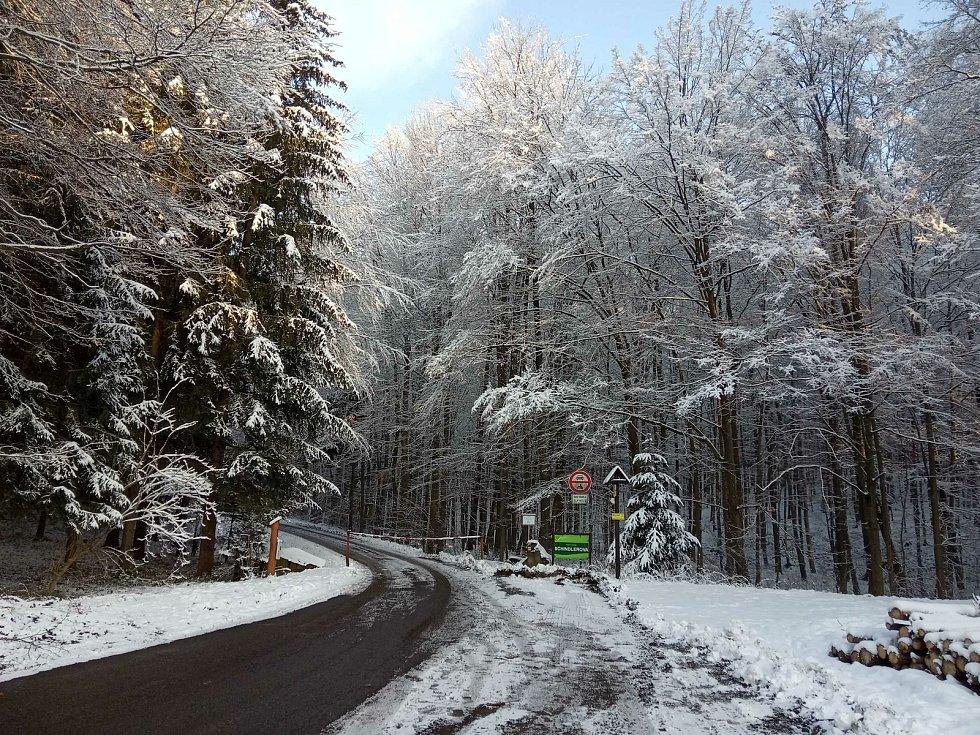 Lesní cesta Schindlerova u křtinského arboreta.