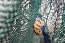 Mezi zbožím z ciziny našla žena v balíku i hada.