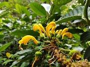 Brněnští vědci chtějí pomoci zachovat unikátní přírodní ekosystémy. V pondělí oznámili vznik platformy, jejíž cílem je boj proti odlesňování amazonských pralesů a zániku domorodých kultur.