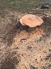 Firma Astra Lednice bez povolení porazila stromy ve dvou židenických ulicích.