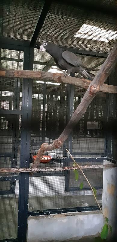 Trio vazů velkých z brněnské zoo přesídlilo do Singapuru.