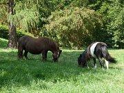 """""""Máme v parku poníky, kteří spásají na svazích trávu a pomáhají tak s její údržbou,"""" popsal ředitel Veřejné zeleně města Brna Jozef Kasala."""