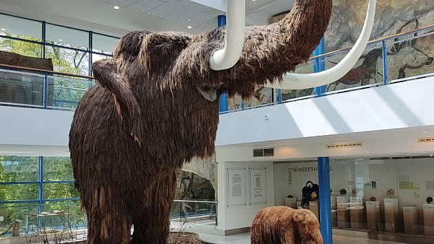 Mamut v brněnském Anthroposu letos slaví devadesát.