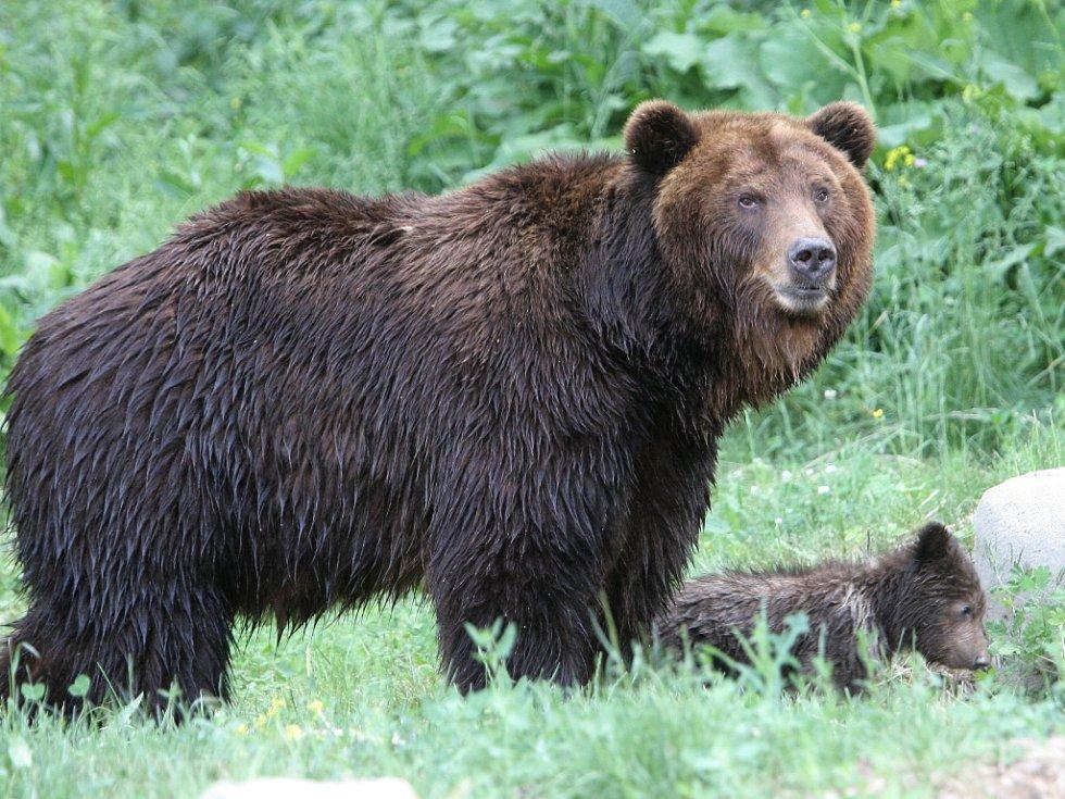 Medvědice Kamčatka vyvedla Kubu a Tobyho ven.