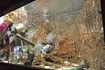 Všechen odpad v akváriu je pro ryby bezpečný.