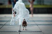 S vysokými teplotami bojují lidé v Brně různými způsoby.