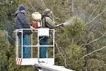 Vědci z Mendelovy univerzity a zahradníci ničí v těchto dnech jmelí na brněnském ústředním hřbitově novým postřikem. Aplikují ho na sedmdesát stromů.
