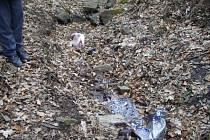 Ubitý pes poblíž Zastávky u Brna.