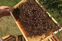 Vášnivý včelař Martin Špaňhel a zároveň IT manažer vymyslel společně se čtyřmi dalšími informatiky zařízení, které monitoruje včely.