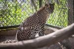 Víkendové slunečné počasí využily tisíce návštěvníků k prohlídce Zoologické zahrady v Brně.