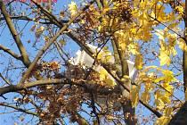 V korunách stromů visela lednice. Nejspíš pozůstatek studentské oslavy.