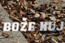Příprava na dušičky na Ústředním hřbitově v Brně