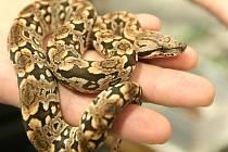 Ještěrky, hadi, červy i myši. Zboží na terarijním trhu bylo rozmanité.
