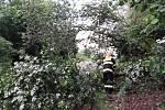 Hasiči po páteční večerní bouřce zasahovali nejvíc na Pohořelicku. Celkem zaznamenali na jihu Moravy asi 40 zásahů. Nejvíc čerpali vodu ze zatopených prostor a odstraňovali popadané stromy.