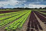 Na vrcholu sezony zaměstnává Farma Ráječek sedmdesát lidí. Pro zeleninu k nim denně míří desítky obchodníků.