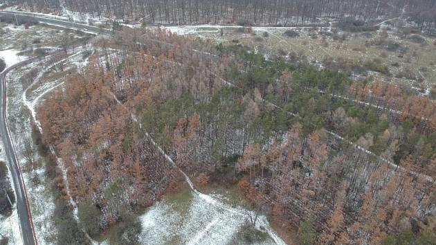 Desítky borovic, které loni v létě podlehly suchu pokácí letos v září lesníci v brněnské přírodní rezervaci Kamenný vrch. Těžba dřeva potrvá asi dva měsíce.