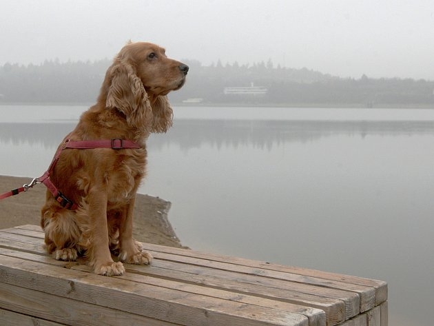 Břehy Brněnské přehrady každé léto lákají tisíce lidí k odpočinku. Aby je nerušili pobíhající psi, chce radnice Kníniček vstup zvířat omezit.