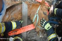 Uvíznutého koně museli ve středu odpoledne v Předkláštěří na Brněnsku vytáhnout hasiči.
