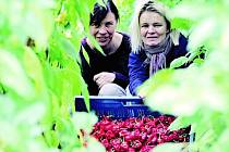 Podnikatelky s chilli papričkami Alena Doležalová a Hana Polanská.