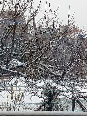 Čtvrteční sněhová nadílka v Brně-Juniánově, jak ji zachytila Čtenářka reportérka Deníku Zdenka Stawarczyková. Děkujeme!