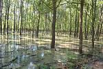 Silné deště minulý týden naplnily tůně, vodní kanály a slepá ramena lužních lesů v oboře Soutok.